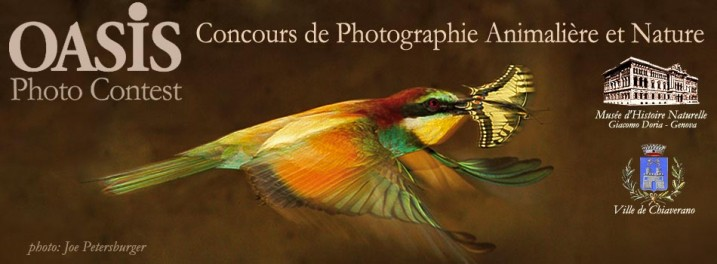 Header-Photocontest-2013-FRA