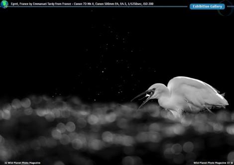 WPP Egret