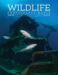 Wildlife-photography-world-Summer-2016-200x258