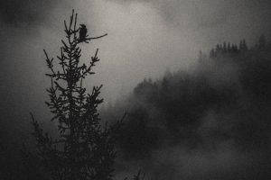 Wild in Black - Ambiance et nature