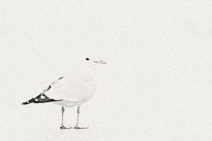 Wild in White - L'original
