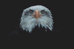 Wild in Black - Croyances et persécution